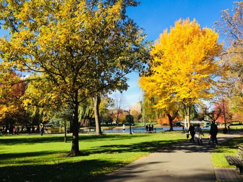 COVID-19 pandemic exposes Boston green space disparity issues