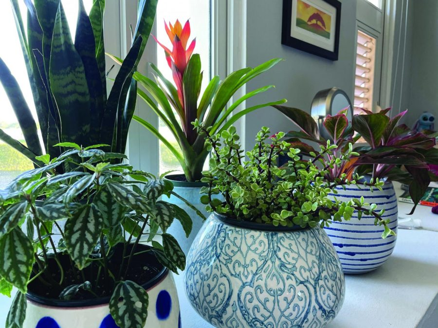 A variety of house plants.